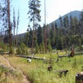 Open forest just off of the trailhead.- Big Horn Peak