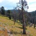 Open sage hillside with sparse tree coverage.- Big Horn Peak