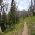 Hiking along the forested spine.- Big Horn Peak