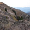 Mountain goats on the Sky Rim Trail.- Big Horn Peak
