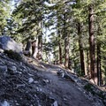 The forested mountain slopes leading toward Kelly Camp.- Ontario Peak