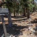 Cedar Glen backcountry camp, located along the Chapman Trail.- Icehouse Saddle via Chapman Trail