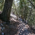 Lower portions of the trail climb through forest.- Icehouse Saddle via Chapman Trail