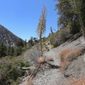 The trail gradually opens up into exposed mountainside landscapes.- Icehouse Saddle via Chapman Trail