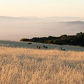 Foraging deer at dawn near Black Mountain Backpack Camp.- Black Mountain Backpack Camp