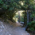 The first portion of the trail traces a mountainside through oak and pine groves.- Cooper Canyon Falls