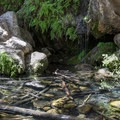 A waterfall lies at the end of the trail.- Rising Sun Trail