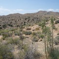 View west to the desert landscape along the trail to Deep Creek Canyon.- Lower Deep Creek Canyon + Warm Springs