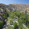 Grove of cottonwoods just upriver from Deep Creek Hot Springs.- Lower Deep Creek Canyon + Warm Springs