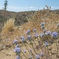 Unidentified species (help us identify it by providing feedback).- Lower Deep Creek Canyon + Warm Springs