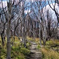 Path through a burned forest near Lago Nordenskjöld in Torres del Paine National Park, Chile.- The W Trek