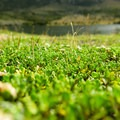 Ground vegetation in Torres del Paine National Park, Chile.- The W Trek