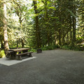Typical campsite at Entrance Bay Campground.- Entrance Bay Campground