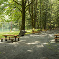 Picnic area at Maple Bay Day Use Area.- Maple Bay Campground + Day Use Area