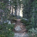 Narrow trail to the peninsula of Island Lake. - Island Lake via Round Lake Trail