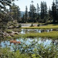 Crooked Lakes past Island Lake is a series of small water bodies frequented by grouse and other winged game.- Island Lake via Round Lake Trail