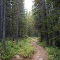 Wide, forested trail on the way to Black Canyon Lake.- Black Canyon Lake