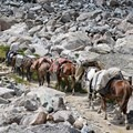 This is a popular pack trail.  Pull over for horses.- Titcomb Basin via Island Lake