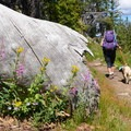 Wildflowers abound in the Wind River Range in summer.- Titcomb Basin via Island Lake