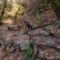 Dogs are welcome on the trail.- Boulder Creek Falls