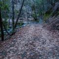 Hiking the Boulder Creek Falls trail.- Boulder Creek Falls