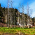 Aspen is plentiful once you break into the higher elevations.- Sky High Lakes Basin