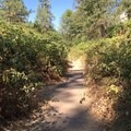 A blackberry-lined path to the springs.- Feather River Hot Springs