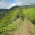 The trail occasionally traverses atop a narrowing ridge.- Waihe'e Ridge
