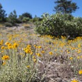 Unidentified species (help us identify it by providing feedback) along the National Children's Forest interpretive trail.- National Children's Forest Interpretive Trail