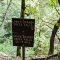 at the bench before you drop into the falls section- Brandy Creek Falls