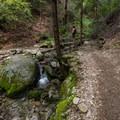 on the trail - Brandy Creek Falls