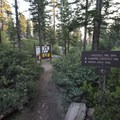 Trailhead for the Champion Lodgepole Pine and Bluff Lake.- Champion Lodgepole Pine + Bluff Lake