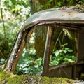 Moss growing on an old car that had crashed in the creek.- Beazell Memorial Forest