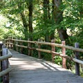 Wooden bridge near the trailhead in the Beazell Memorial Forest.- Beazell Memorial Forest