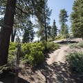 Pine Knot Trail after crossing the Skyline Trail en route to Grand Viewpoint.- Grand View Point Hike