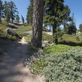 Pine Knot Trail en route to Grand Viewpoint.- Grand View Point Hike