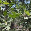 Unidentified species (help us identify it by providing feedback).- The Woodland Interpretive Trail