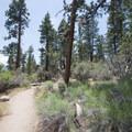 Woodland Interpretive Trail.- The Woodland Interpretive Trail