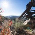 Scarlet bugler (Penstemon centranthifolius) at Doble Mine.- Doble Mine