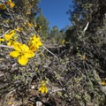 Unidentified species (help us identify it by providing feedback) along the Cougar Crest Trail.- Cougar Crest Trail
