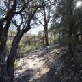 Cougar Crest Trail.- Cougar Crest Trail