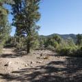 Cougar Crest Trail en route to Bertha Peak.- Bertha Peak Hike