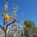 Unidentified species (help us identify it by providing feedback) along the Cougar Crest Trail en route to Bertha Peak.- Bertha Peak Hike