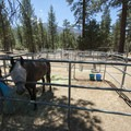 Horse stalls at Wildhorse Family Equestrian Campground.- Wildhorse Family Equestrian Campground