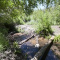 Santa Ana River in mid-summer at South Fork Campground.- South Fork Campground, Santa Ana River