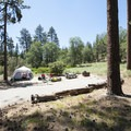 Typical campsite at Barton Flats Campground.- Barton Flats Campground