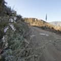 Morton Ridge Trail.- Morton Peak Hike