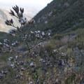 Unidentified species (help us identify it by providing feedback).- Morton Peak Hike