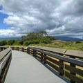 A 2,200-foot boardwalk is the highlight of the wildlife refuge.- Keālia Pond National Wildlife Refuge