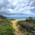 Several sandy paths lead from the boardwalk to the shoreline.- Keālia Pond National Wildlife Refuge